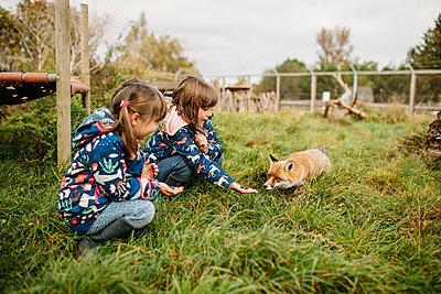 children feeding a fox at Avon Valley wildlife park