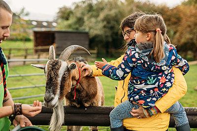 family feeding a goat at Avon Valley wildlife park