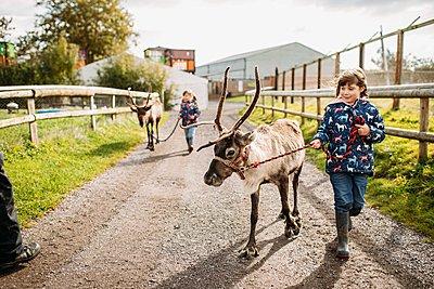 children walking reindeers at Avon Valley wildlife park
