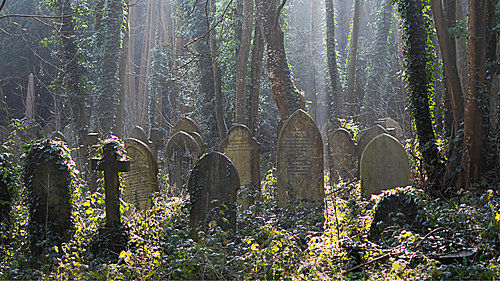 Tombstones in a forest