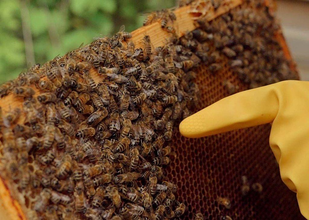 Bee keeping in Bristol